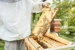 Apicultor que trabaja en la colonia de la abeja que sostiene el panal Fotos de archivo