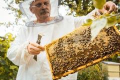 Apicultor que trabaja en la colonia de la abeja que sostiene el panal Imagen de archivo