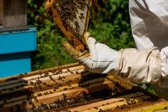 Apicultor que trabaja en sus colmenas en el jardín Fotografía de archivo libre de regalías