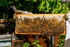Apicultor que trabaja en sus colmenas en el jardín Fotos de archivo libres de regalías