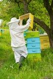 Apicultor que trabaja en sus colmenas en el jardín Imagen de archivo