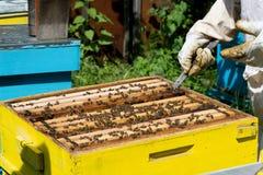 Apicultor que trabaja en sus colmenas en el jardín Imagenes de archivo