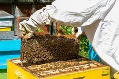 Apicultor que trabaja en sus colmenas en el jardín Foto de archivo libre de regalías