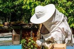 Apicultor que trabaja en sus colmenas en el jardín Fotografía de archivo
