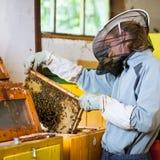 Apicultor que trabaja en un colmenar Imagen de archivo libre de regalías