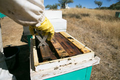 Apicultor que trabalha no apiário Fotografia de Stock