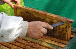 Apicultor que verifica o favo de mel Foto de Stock Royalty Free