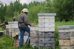 Apicultor Working en yarda de la abeja Fotos de archivo libres de regalías