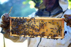 Apicultor y abejas imagen de archivo