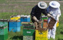 Apicultores que comprueban los peines de la miel en el campo Foto de archivo