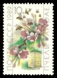 Apicultura, abeja, mellifica de los Apis Fotos de archivo
