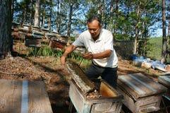 Apicultura de Asia, apicultor vietnamita, colmena Foto de archivo libre de regalías