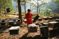 Apicultura de Asia, apicultor vietnamita, colmena Imagen de archivo