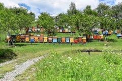 Apicultura en yarda rural durante la primavera Imágenes de archivo libres de regalías