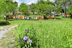 Apicultura en yarda rural durante la primavera Fotografía de archivo
