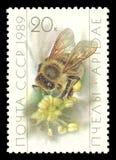 Apicultura, Honey Bee, mellifica de los Apis Fotos de archivo