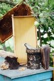 apicultura Panal de la miel de Pasika Fotos de archivo