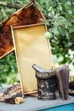 apicultura Panal de la miel de Pasika Imágenes de archivo libres de regalías