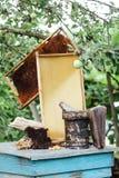 apicultura Panal de la miel de Pasika Imagen de archivo