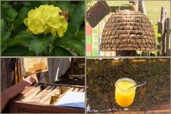 Apicultura y flujo de trabajo de la producción de la miel Imagen de archivo