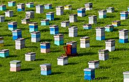 Apiculture Royalty Free Stock Photos