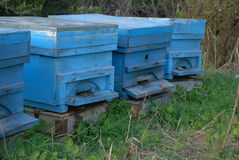 Apiculture Stock Image