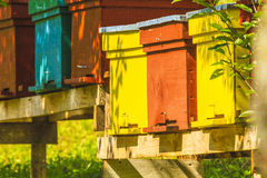 Apiculture Royalty Free Stock Photo