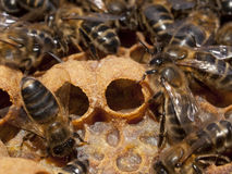 Apiculture Royalty Free Stock Image