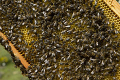 Apiculture Royalty Free Stock Images