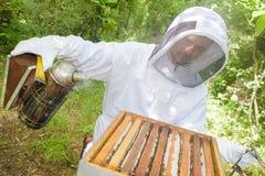 Apiculturist smoking the bees. Yard stock photos