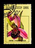 Apifera Ophrys - ορχιδέα μελισσών, serie, circa 1991 Στοκ εικόνες με δικαίωμα ελεύθερης χρήσης