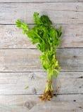 Apio verde con la raíz en fondo de madera Fotos de archivo libres de regalías