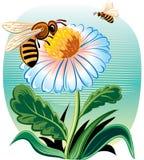apis蜂mellifera硬币工作者 免版税库存图片