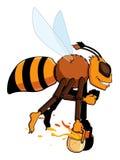 apis pszczoły mellifera specie pracownik Obraz Royalty Free