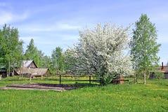 aple δέντρο Στοκ Εικόνα