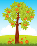 Aple tree with red apple Royalty Free Stock Images