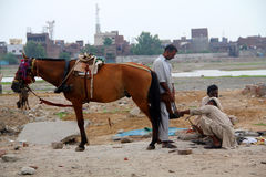 Aplicação do casco do cavalo em andamento Fotografia de Stock