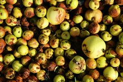 Applebunch Royalty Free Stock Images