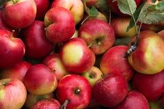 Aplles rossi freschi Fotografia Stock