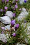Apls-Blumen Stockbilder