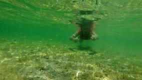 Apnea femenino subacuático en bahía del tiburón