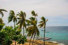 Apo海岛,菲律宾,在海岛海滩线的看法 棕榈树、海和小船 库存图片