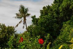 Apo海岛,菲律宾,在海岛海滩线的看法 棕榈树,海 免版税图库摄影
