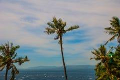 Apo海岛,菲律宾,在海岛海滩线的看法 棕榈树,海 免版税库存照片