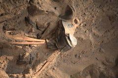 Apocalypsenkonzeptschädel und Knochen abstrarct Hintergrund Lizenzfreie Stockfotografie