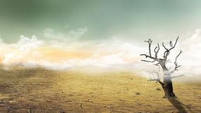 Apocalyptic Dry Tree Concept Scenery Stock Images