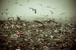 Apocalyptic scene of birds flying over the dump Stock Photography