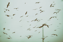 Apocalyptic scene of birds flying over the dump Royalty Free Stock Images