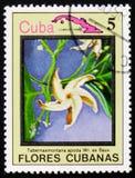 Apoda Tabernaemontana, serie λουλούδια της Κούβας, circa 1983 Στοκ Φωτογραφίες