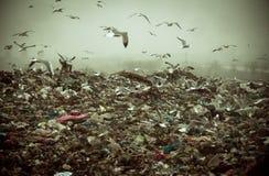 Apokalyptisk plats av fåglar som flyger över förrådsplatsen Arkivbild